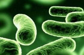 5 أطعمة تشكل أرضا خصبة للتلوث بـالبكتيريا المسببة للأمراض