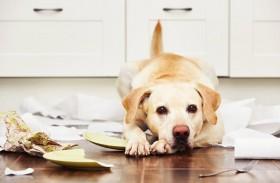 كيف تعد الكلب للمكوث بمفرده في المنزل؟