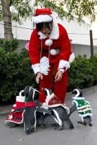 طيور البطريق الأفريقية ترتدي ملابس عيد الميلاد خلال نزهة مع حارستهم في متنزه هاكيجيما سي بارادايس في يوكوهاما، قرب طوكيو.    (ا ف ب)