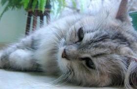 مساع حثيثة لإيواء 110 قطط طُرِدت من شقة