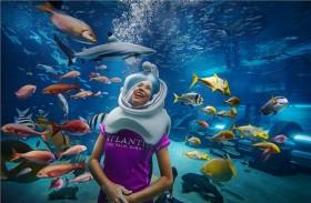 منتجع أتلانتس النخلة يحتفل بالذكرى الثلاثين لأسبوع القرش بتقديم عروض خاصة