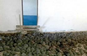 10 آلاف سلحفاة نادرة في منزل