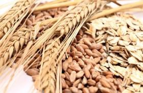 6 عناصر غذائية للبروتين النباتي