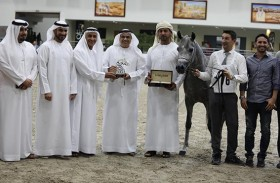 حضور متميز لمربط دبي ولأبناء كنزه الإنتاجي «الرشيم»