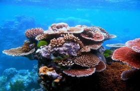 موجات الحر تنذر بـ«كارثة» للشعاب المرجانية