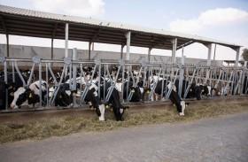 مزارع العين تنال شهادة الآيزو 22000:2018