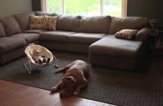 كلب ضخم يجالس الأطفال