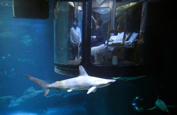 غرفة للنوم وسط القرش
