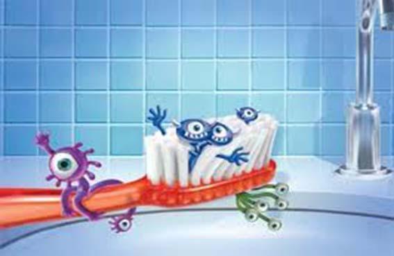 الجراثيم تعشق  فرشاة الأسنان المبللة