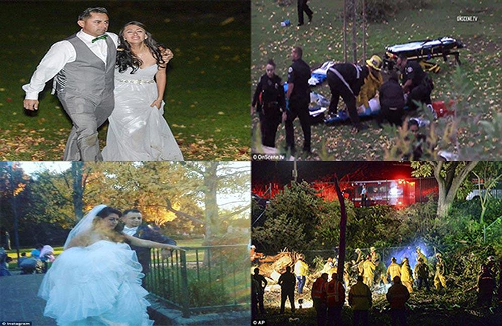 شجرة تحول زفافاً إلى مأساة