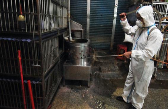 إنفلونزا الطيور كبدت الصين 6 مليار دولار